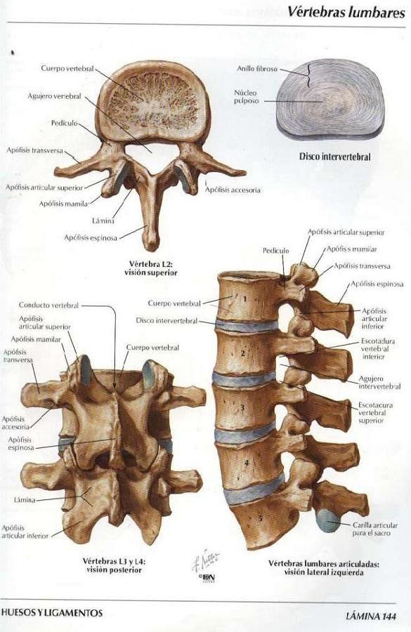 Asoterci Casc Columna Vertebral Anatomia Del Esqueleto Huesos Del Cuerpo Humano Anatomia Del Esqueleto Humano
