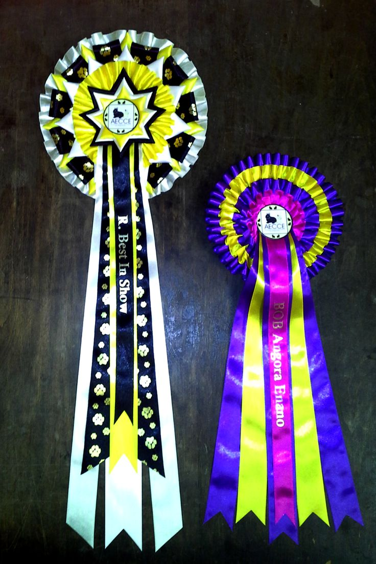 Best in Show Rosette with a large 4 tier rosette called Malaga Lux 4 Tier (3 extra wide) Both rosettes come in multiple colour combinations. Please comment which colours you think would look good?