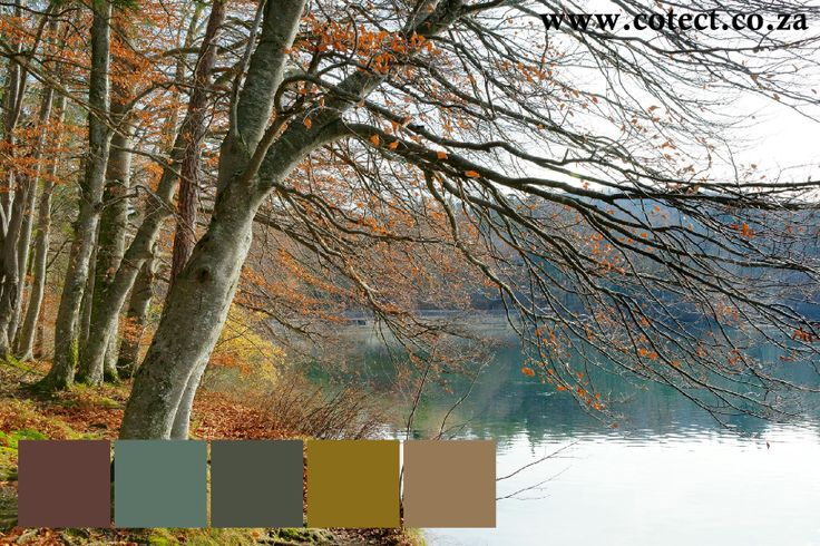 And now we've gone through all the seasons except Autumn the most beautiful of all. Here is some #Colour inspiration for #painting anything anytime