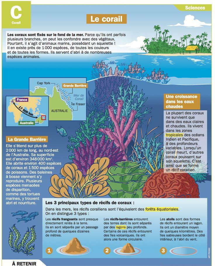 Fiche exposés : Le corail