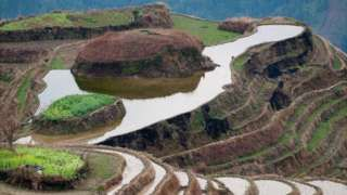 Derechos de autor de la imagen                  Thinkstock                  Image caption                     En la provinicia Jiangsu, unos hipnóticos arrozales.   En una destartalada granja de cerdos cerca de Wuxi, en la provincia Jiangsu, China, un extranjero se baja de un taxi. La familia se sorprende: su pequeña granja queda al final de una ruta pedregosa en medio de arrozales. Rara vez llegan extranjeros en taxis pidiendo permiso par