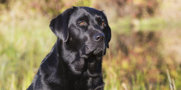 Citaten Democratie Xxi : Grappige zinnen over honden dissende glimlach het