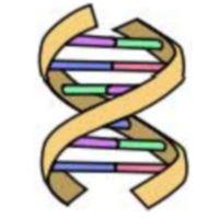 ADN Fácil Esta sencilla aplicación te permitirá entender conceptos clave acerca de la estructura de la doble hélice (complementariedad de bases, cadena inversa,...) y sobre todo te permite interpretar el resultado de la traducción en aminoácidos de la secuencia que tu escribas.