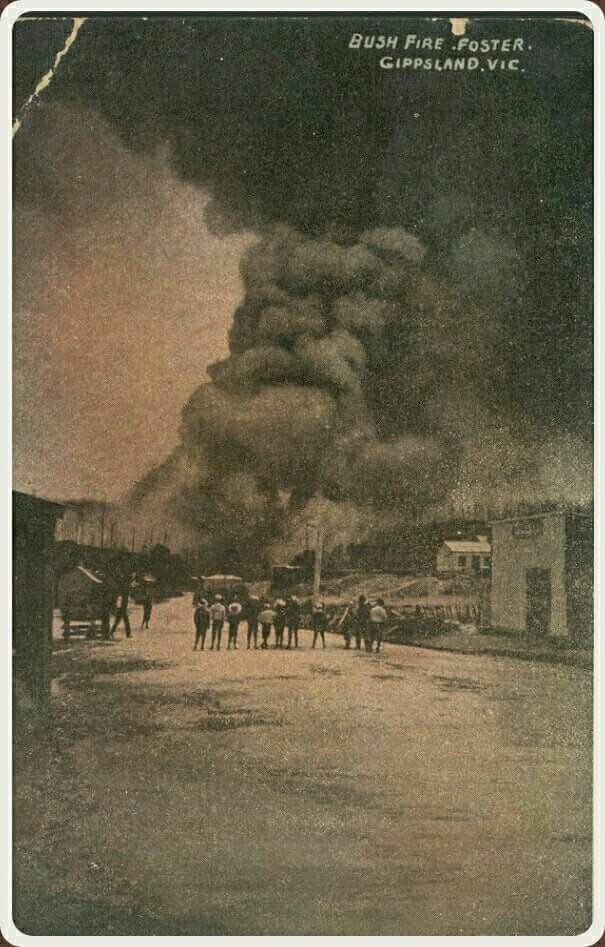 Bush fire at Foster,Victoria circa 1907. State Library of Victoria.