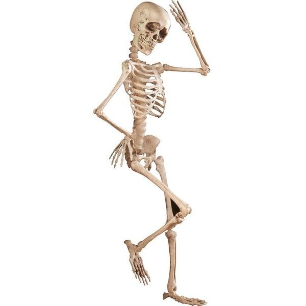 Spooky Posable Skeleton Halloween Décor, 4-ft Tall (2,280 INR) ❤ liked on Polyvore featuring home, home decor, holiday decorations, skeleton home decor and halloween home decor