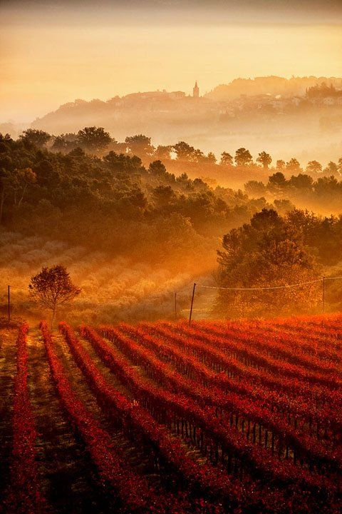 Vineyards, Umbria, Tuscany, Italy.