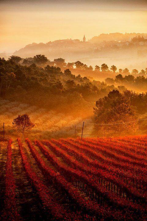 Vineyards, Umbria, Tuscany, Italy