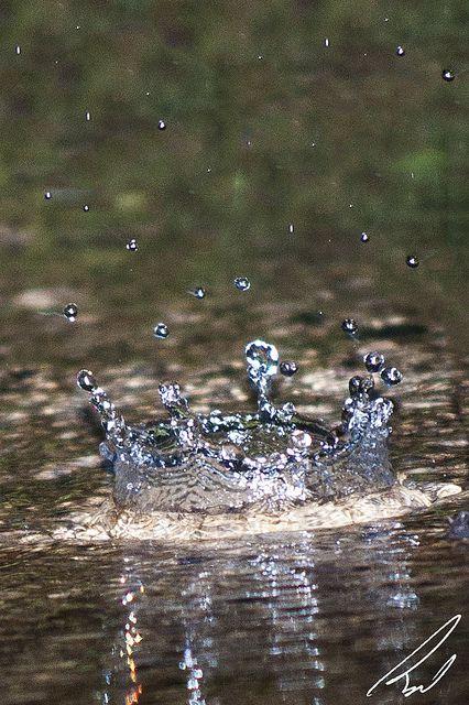#Photography Rain Drop