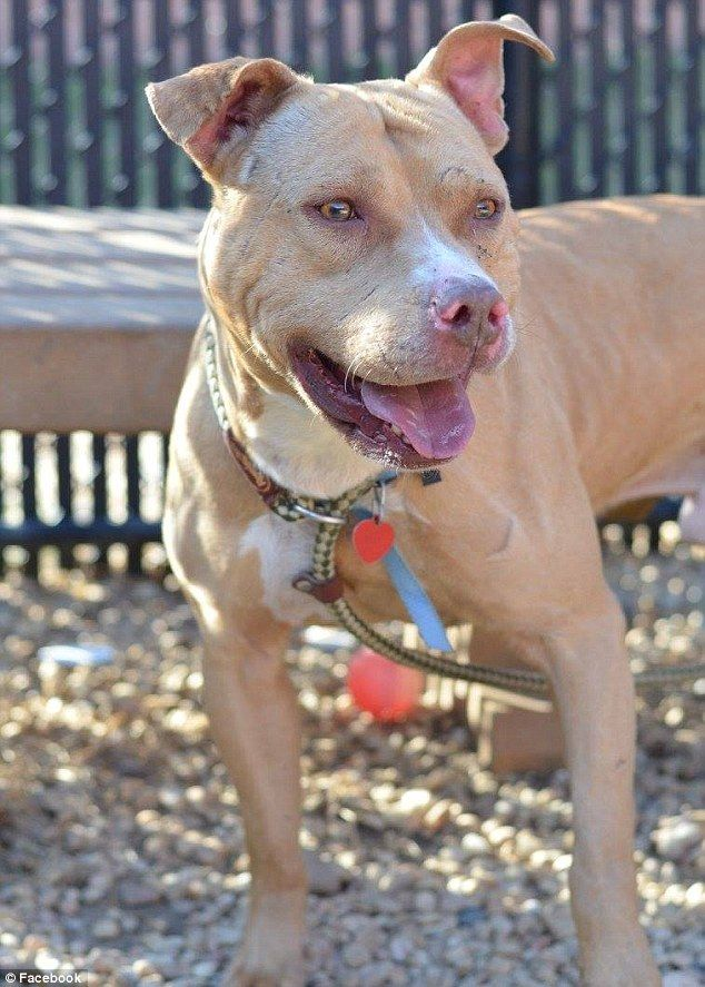 March (pictured) has a lot of energy and is a strong dog, in need of an active life, says the Facebook ad
