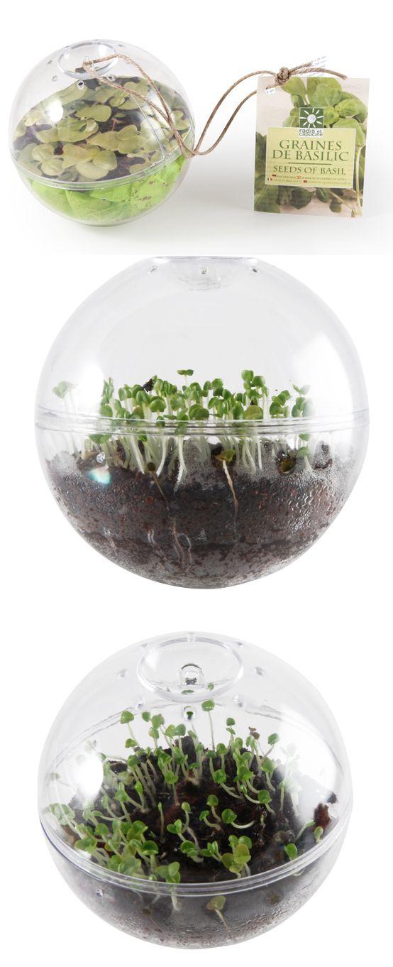 avec radis et capucine suspendez chez vous une boule enti rement transparente et faites. Black Bedroom Furniture Sets. Home Design Ideas