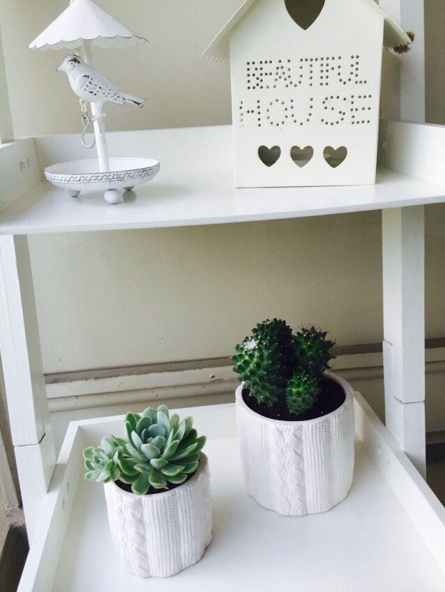 Mini garden for Succulents