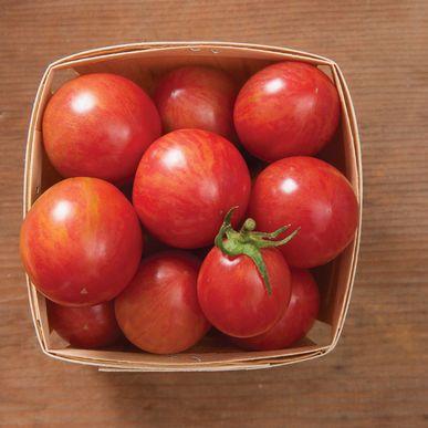 Pink Bumblebee Organic Tomato
