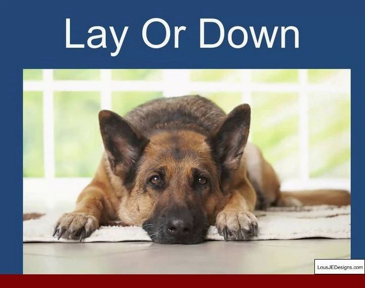 Dog Training Tips Labrador Retriever And Pics Of How To Teach Your