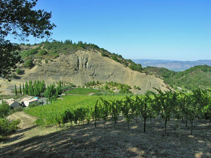 Gorgeous views of Napa #vineyardviews #LatifeHayson