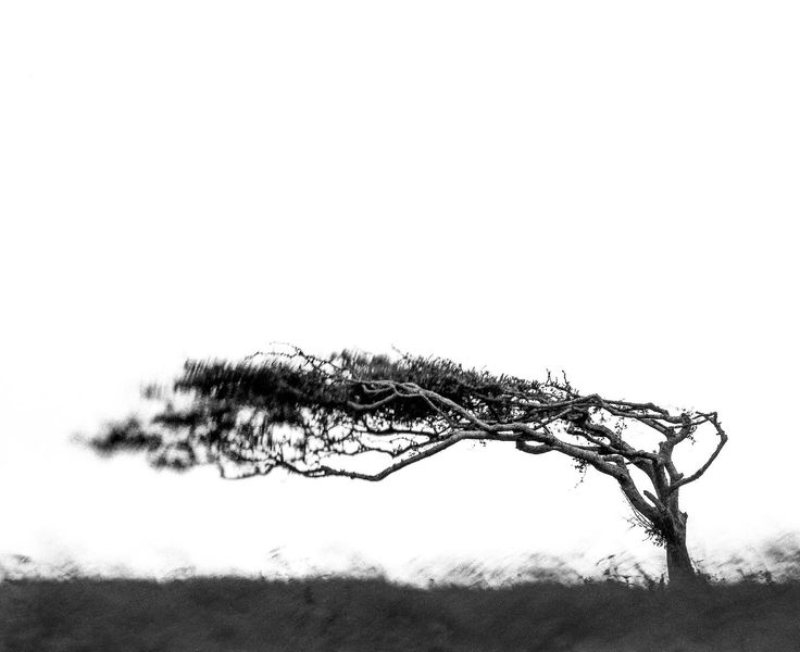 Windswept - Clickasnap