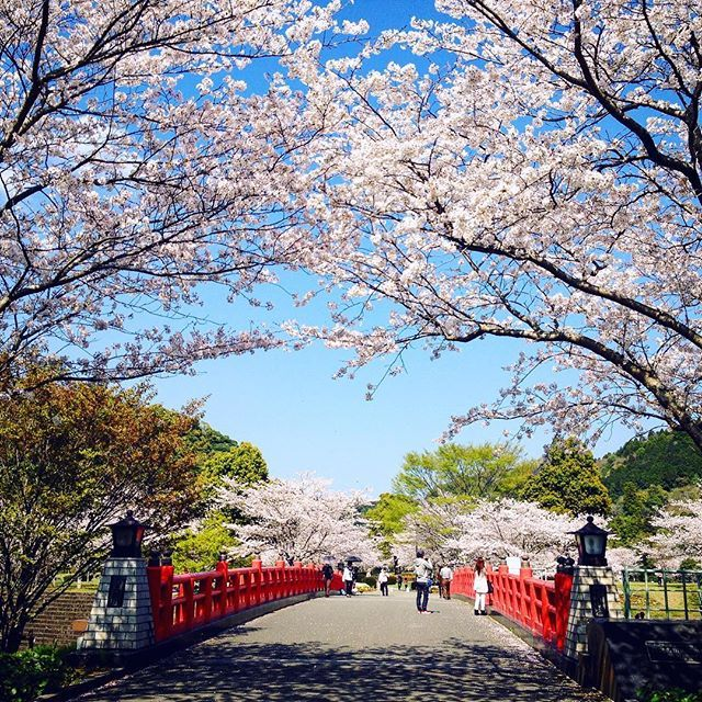 【sunport16】さんのInstagramをピンしています。 《Arched entrance made of cherry blossoms🌸(from last spring) #bridge #entrance #pink #spring #bluesky #warm #season #japanlandscape #redbridge #landscape #photography #beautiful #lovelyday #beautifulday #cherry #cherryblossoms #picnic #happy #naturelovers #nature #countryside #walking #feelinggood #outdoors #relax》