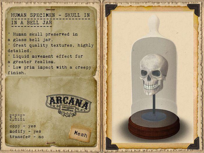 {A} Human Specimen - Skull in Bell Jar