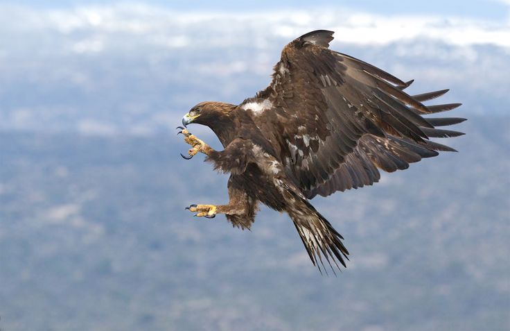 """https://flic.kr/p/Gerh5A 