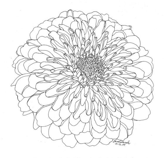 Chrysanthemum Limited Edition Ink Drawing by kayladesigns on Etsy