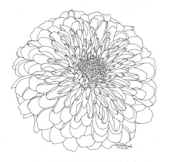 Chrysanthemum Flower Line Drawing : Chrysanthemum limited edition ink drawing chrysanthemums
