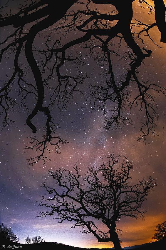 Albero e le stelle, Elviria, Marbella, Malaga, Spagna