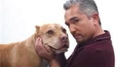 """Cesar Millan's Pitbull """"Daddy"""" Dies, Dog Whisperer Mourns Loss"""