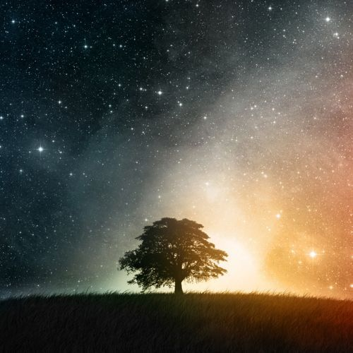Stars And Trees by Jacek Tabisz on SoundCloud