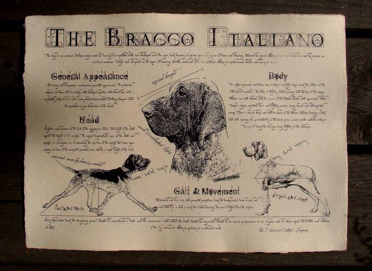 Antique styled dog standard - Bracco Italiano by Creativedoglover on Etsy