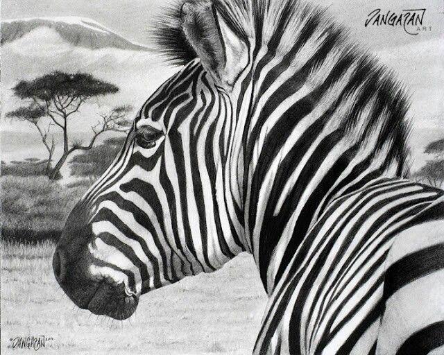Zebra pen drawing | Drawings | Pinterest | Zebras ...