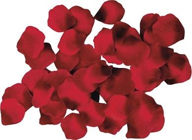 caramel flan flan flan in a can the smoothest flan rose petal flan ...
