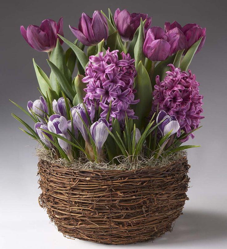 Flower Bulb Gift Baskets : Best flower gardens gifts images on bulb
