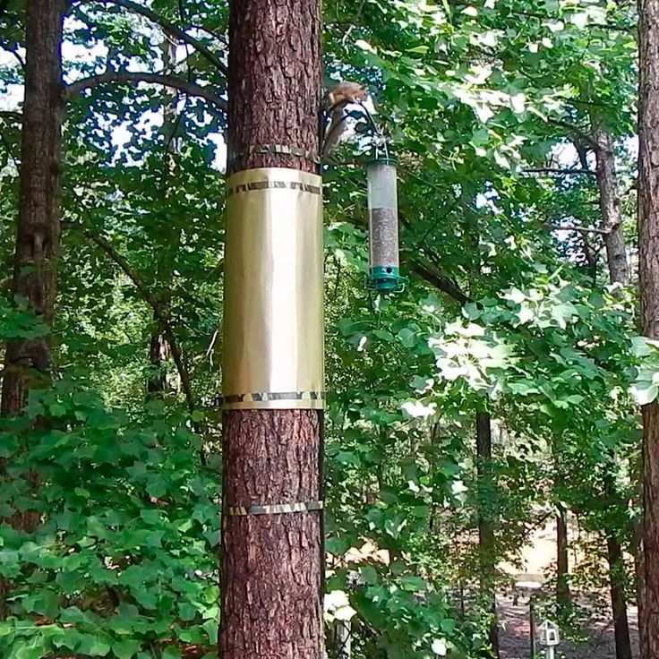 how to keep squirrels from climbing bird feeder pole