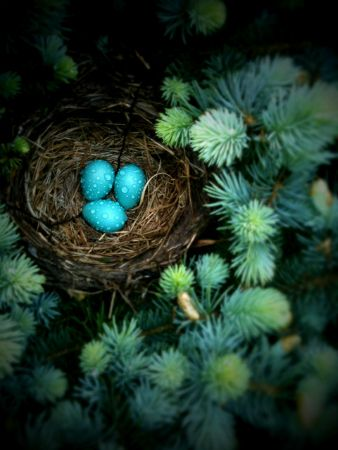 : Blue Eggs, Birds Nests, Blue Green, New Life, Easter Bunnies, Ivy Houses, Robins Eggs Blue, Sweet Peas, Christmas Trees