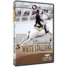 NATURE: Legendary White Stallions DVD - shopPBS.org