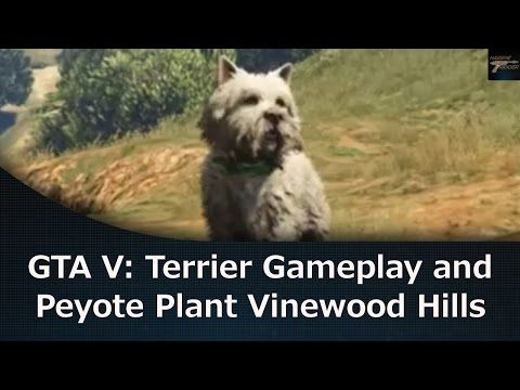 GTA V Terrier Gameplay and Peyote Plant Vinewood Hills - YouTube