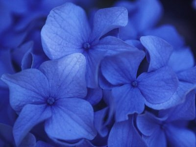 259 Best Floriography Language Of Flowers Images On Pinterest