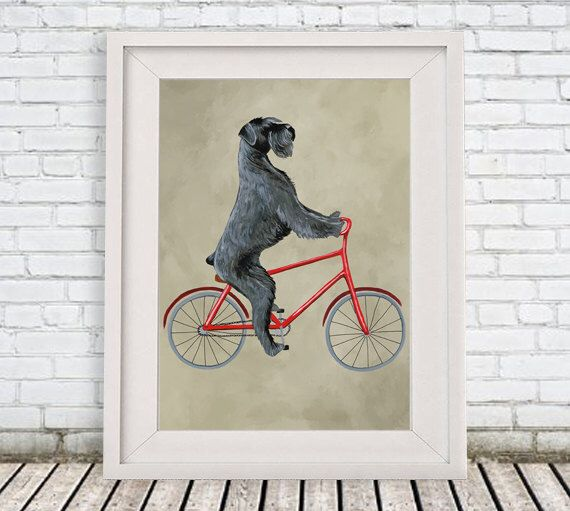 Giant Schnauzer Print, schnauzer Illustration Art Poster Acrylic Painting Kids Decor Drawing Gift, Dog on bicycle, bicycle print by CocktailZoo on Etsy https://www.etsy.com/uk/listing/263730154/giant-schnauzer-print-schnauzer