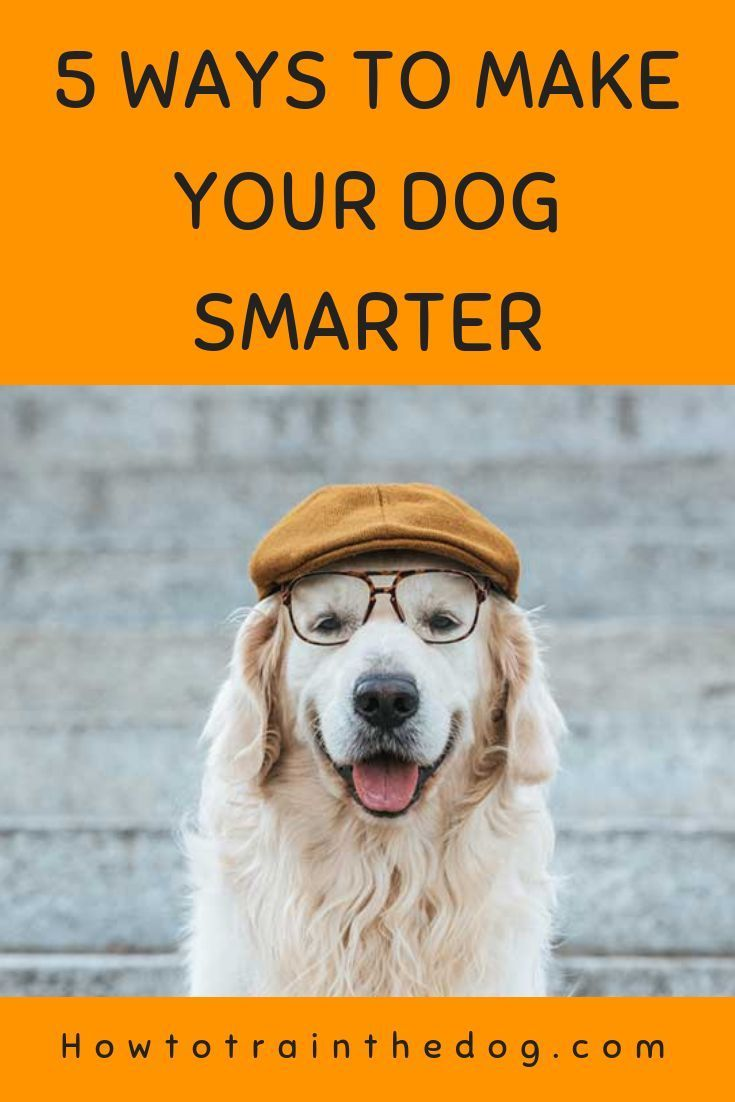 How To Make Your Dog Smarter Minipet Online Pet Boutique Is A Melbourne Based For Small Dogs Cats And Their Human Guardians We Ship Dogs Dog Training Tips Dog Training