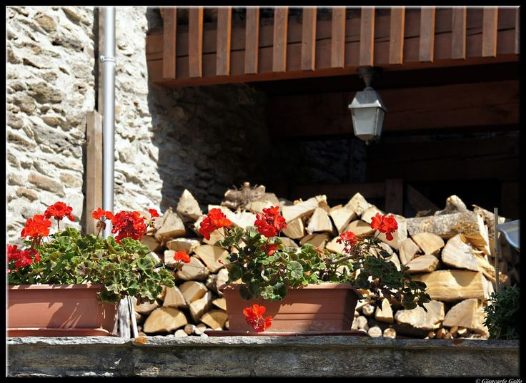 Geraniums and firewood by Giancarlo Gallo