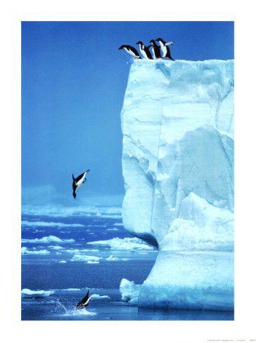 Penguins Diving Off an Iceberg by Steve Bloom