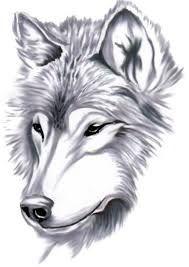 LOBO DA MEIA-NOITE: Como desenhar um lobo irritado, zangado Lobo