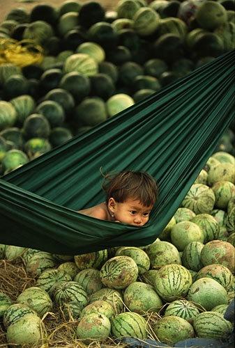 Pequeno menino cambojano em meio a melancias.