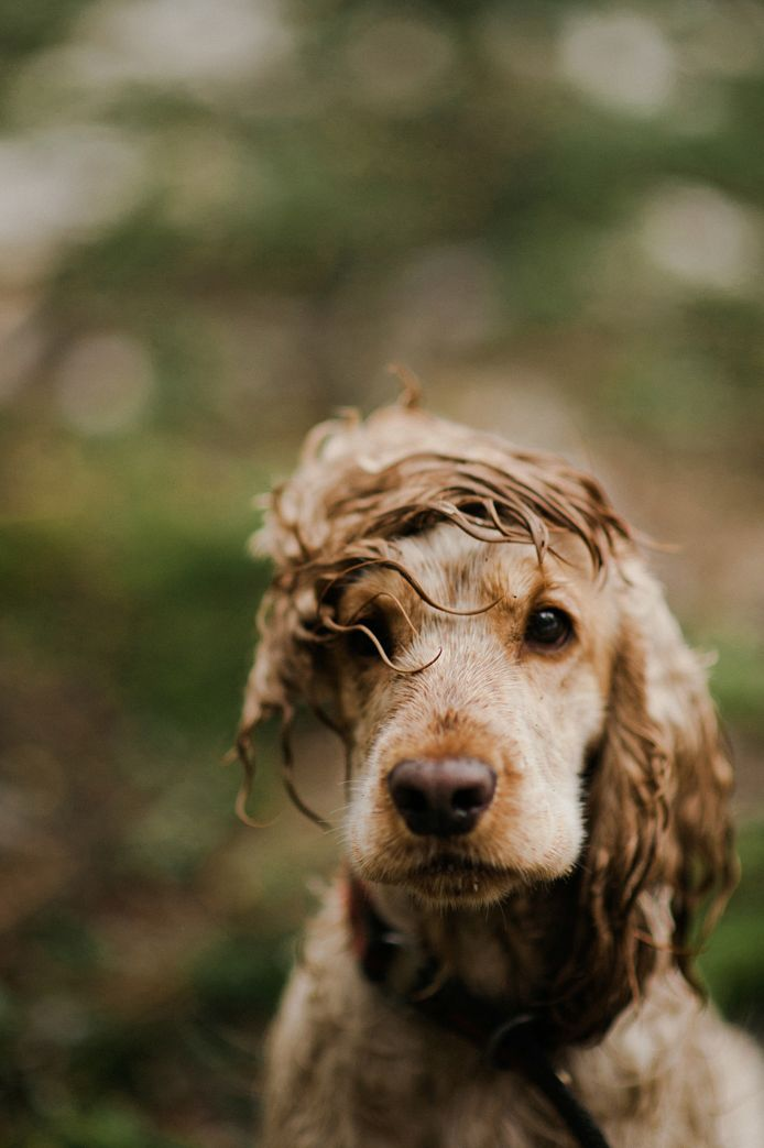 English Sets, Messy Hair, Cutest Dogs, Silly Dogs, Dogs Photography, Nature Photography, Baby Dogs, Hair Looks, Animal