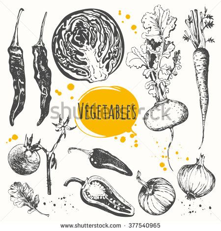 Black and White Botanical Drawing Vegetable   Vector illustration with sketch of mediterranean vegetable. Set of ...