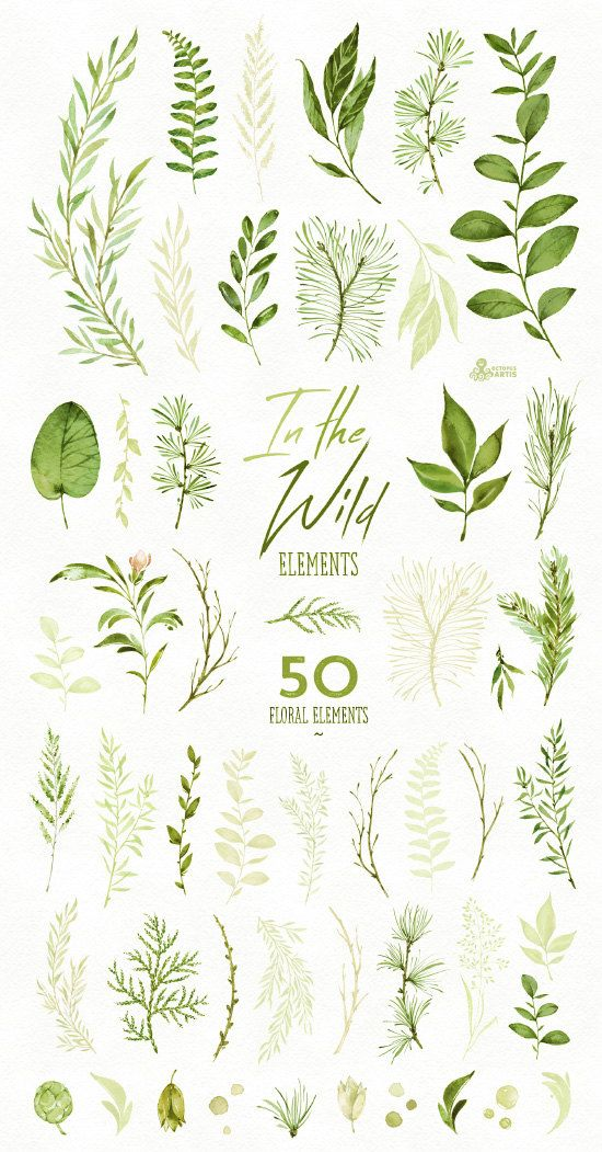 In the Wild. 50 Individual watercolor floral Elements, leaves, wedding invitation, suite, greeting c