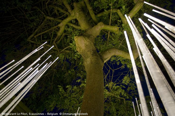 Nature is mind-blowing, appreciate it also at night with #Reeds for #outdoors lighting ► http://bit.ly/_Reeds #design Klaus Begasse