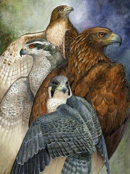 Хижі птахи/Хищные птицы Украины(Соколиная Охота