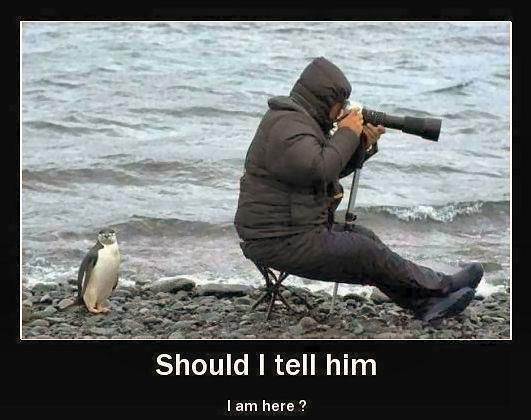 Penguin and photographer
