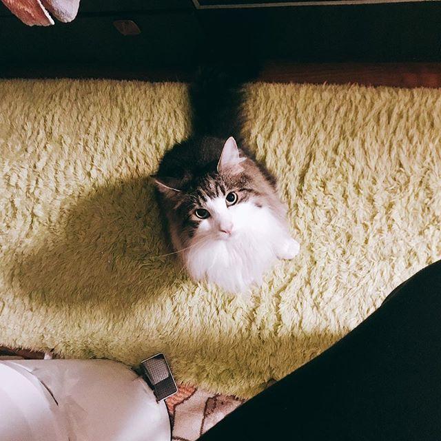 「(ご飯まだ?)」🐈🌿✨ #ねこ部 #ねこのきもち  #お風呂 #ノルウェージャンフォレストキャット #ノルウェージャンフォレストキャット部 #青空 #tbt #ペット#ペット写真 #愛猫 #猫好きさんと繋がりたい #猫バカ #猫さん #ねこ動画 #猫日記 #follow #followme #tbt #f4f #血統書  #青空#パンケーキ#ランチ#お洒落さんと繋がりたい#痩せる#コスメ #お弁当#猫のいる暮らし#犬のいる暮らし#猫