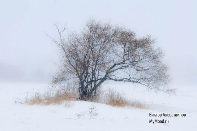 Снегопад сегодняшний и одинокое дерево в поле